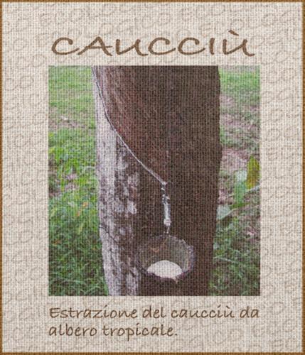 caucciu